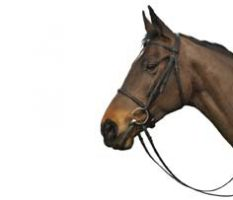 Caldene Bridle-Plain Raised Snaffle CT200