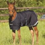 Horseware Amigo Foal Rug 200g Turnout - AARHIV