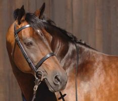 Caldene Plain Snaffle Bridle-CT203