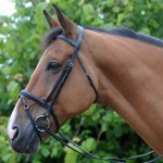 Economy Flash Bridle-John Whitaker