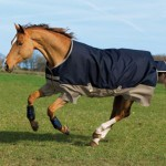 Horseware Mio 200g Medium Turnout AASA42