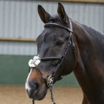 Eastwood Mexican Bridle - John Whitaker BR050