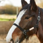 Firefoot Fully Adjustable Headcollar-FFHC