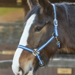 Firefoot Sporty Look Headcollar-FFHC031