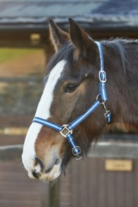 Sporty Look Headcollar in Navy
