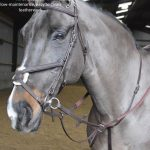 John Whitaker Ready To Ride Martingale - MA054